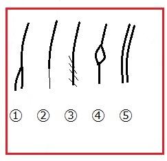 身体部分の種類1~5.jpg